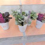【ガーデニング】グランドカバーにアジュガを植えました!