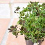 ガーデニング用植物を追加購入!花壇が華やかなに!
