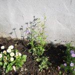 花壇に植物を追加。やはり物足りなさを感じ、華やかに。