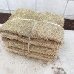 駐車場に芝を植えてみた!