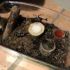 カブトムシとクワガタの飼育の始め方